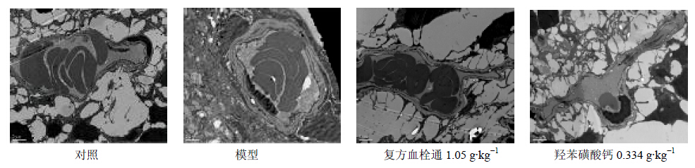 羟苯磺酸钙改善糖尿病大鼠视网膜病变及其机制研究